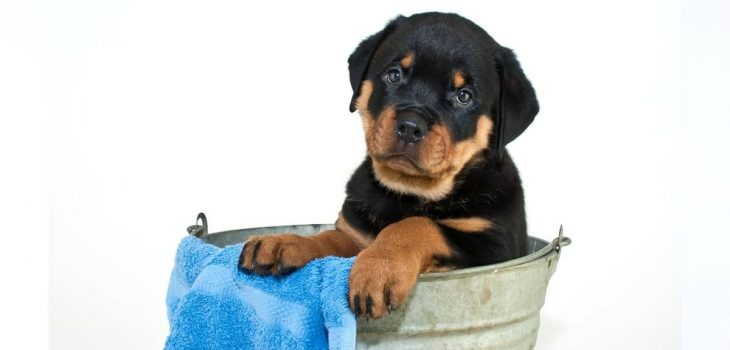 Best Tips On What To Wash A Puppy With